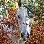 Horse, hiding, forest