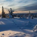 Norway, winter, snow, spruce, footprints, high-definition desktop wallpaper winter scenery