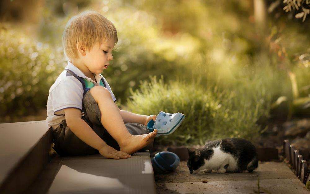 The little boy kitten friend photography wallpaper