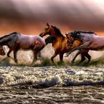 Beach three horses wallpaper