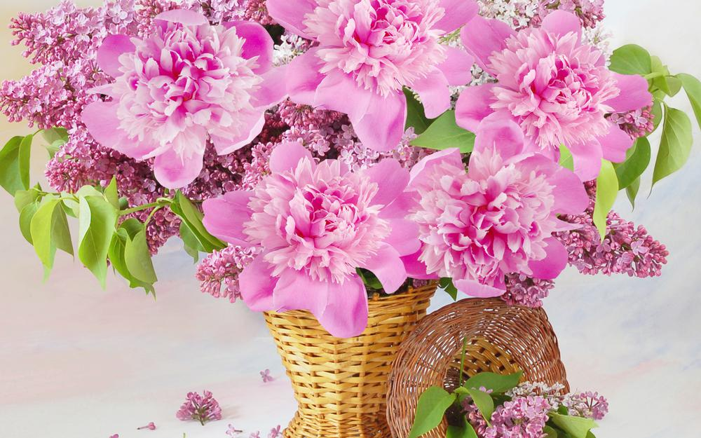 Basket, flower, peony, lilac, wallpaper