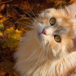Autumn leaves, little face, mustache, ginger cat, desktop wallpaper