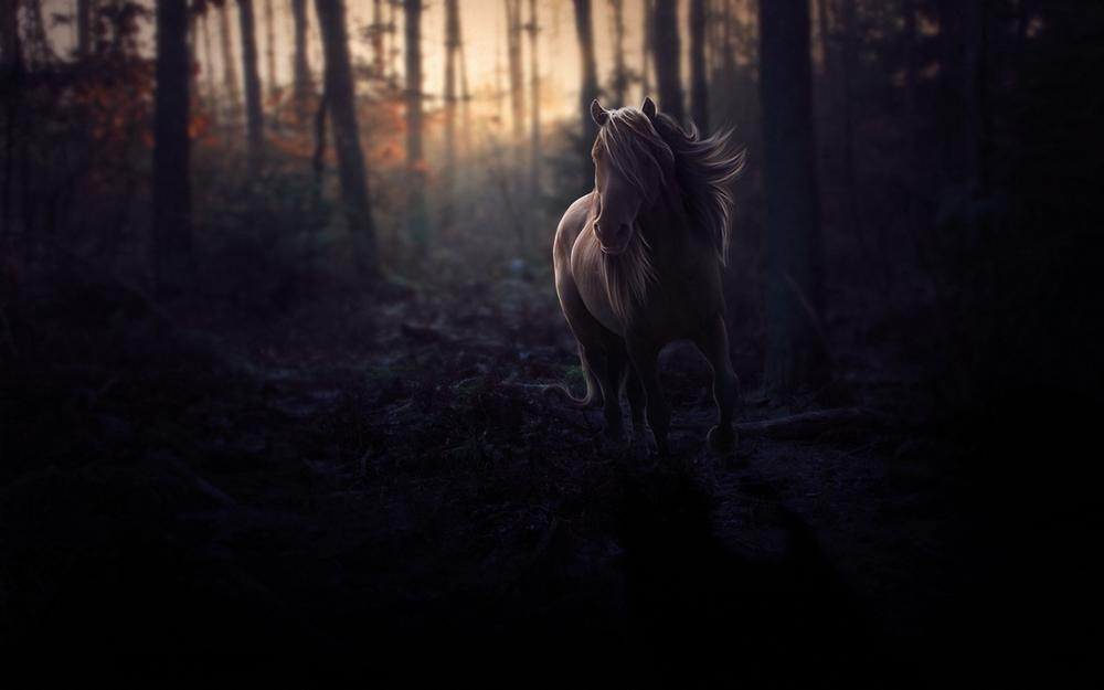 Forest, night horse