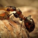Nature macro insect ant resin