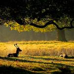Sun, deer, baby, tree, leaves, deer, horns, nature, grass