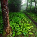 Forest, trees, plants, green pictures, paths, nature, landscape wallpaper