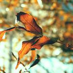 Branch, leaves, nature
