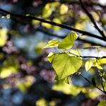Nature, leaves, branches, sharpness, focus