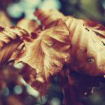 Leaves, autumn, nature, dry, yellow, macro