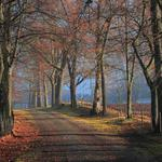 Alley, autumn, road, woods, house, quiet, landscape desktop wallpaper