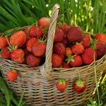 Strawberry, harvest, grass