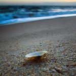 Shell, sea, water