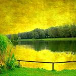 Nature lake trees nature the lake trees wallpaper