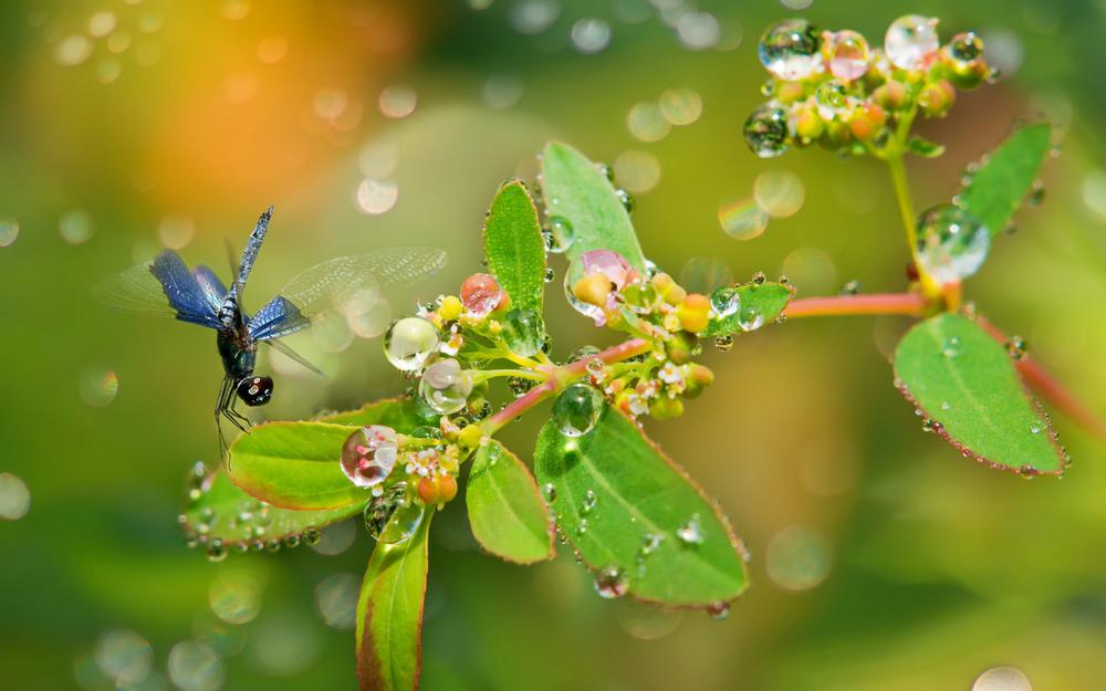 Water, insect, freshness