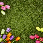 Decoration, colorful, tulips, spring, flowers, spring