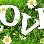 Letters, love, grass, letters, chamomile, chamomile, grass, in love, love