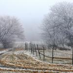 Morning fog, fence, trees, winter landscape, white, desktop wallpaper