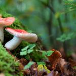 Toadstools, mushrooms, fly agaric