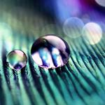 Two, drops, dew