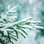 Winter, branches, nature, bokeh, snow, trees