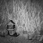 Grass, insects, ant, house, drink, milk, can