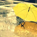 Umbrella yellow puddle
