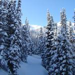 Trees, winter, snow, landscapes, nature, winter