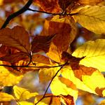 Autumn, leaves, branches