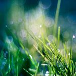 Grass, drops, dew, plants, greenery, macro