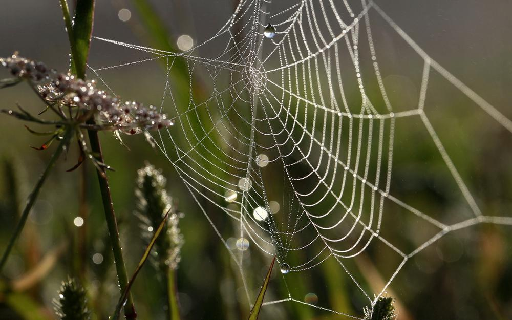 Cobweb covered with dew in the morning