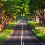Road, green woods, summer, nature, beautiful road scenery, eye protection wallpaper