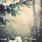 Weather, nature, snow, winter, trees, branches, forest