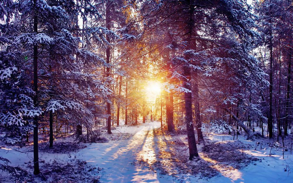 Nature, rays, forest, sun, winter, snow, light