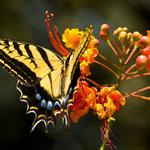 Nature, butterfly, flower