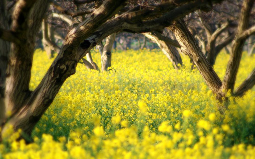 Spring, nature, flowers, tree, spring pictures for your desktop, summer, beauty, tenderness, summer