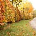 Leaves, autumn, bushes, trees, road, nature