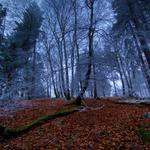 Leaves, forest, autumn, trees, seasons, winter, years