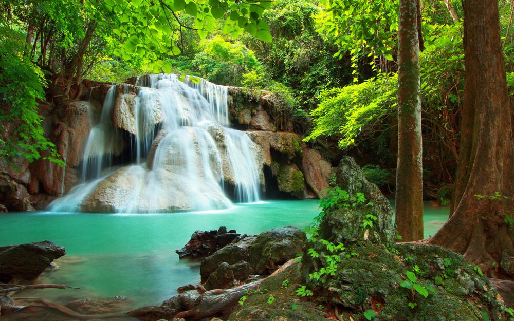 Nature, forest, river, waterfall, trees, green leaves, plants, beautiful pictures, eye protection, close to nature, landscape desktop wallpaper