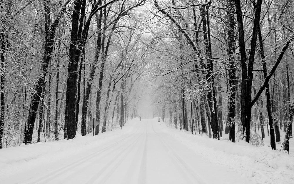 Winter, forest, snow, trees, road