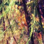 Leaves, photos, branches, background wallpapers for your desktop, nature, tree