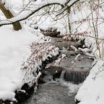 Forest, stream, trees, winter, snow, drifts