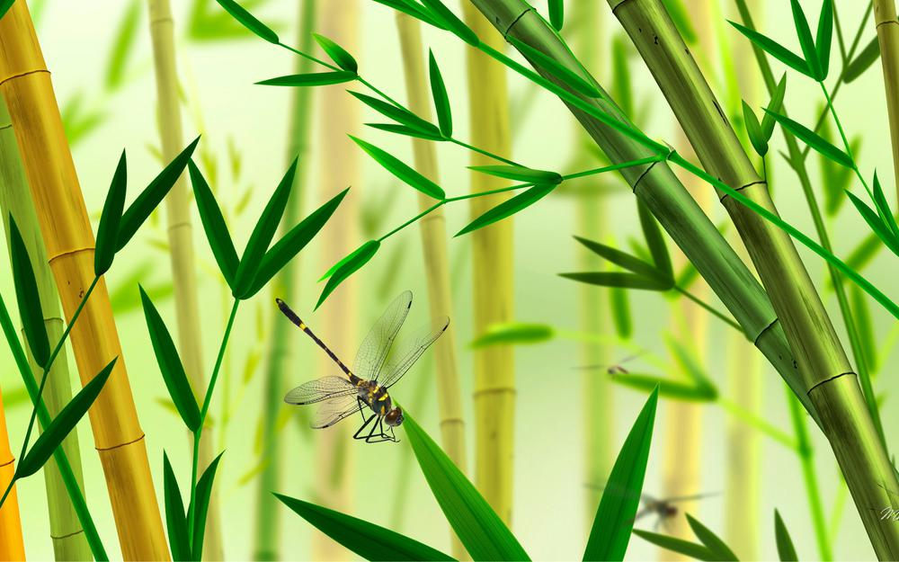 Bamboo, dragonfly, bamboo leaves, insect, desktop wallpaper