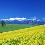 Clouds, meadow, tree, mountains, summer, valley