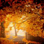 Autumn wallpaper, woods, leaves, park, landscape, fence pictures