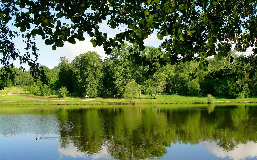 Leaves, pond, branches, duck, trees, park