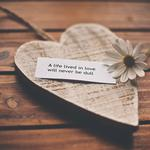 Romance, recognition, words, love, heart, life, feelings, chamomile