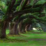 Park, summer, nature, greenery, forest, trees, grass, spring