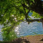 River, summer, tree, glare