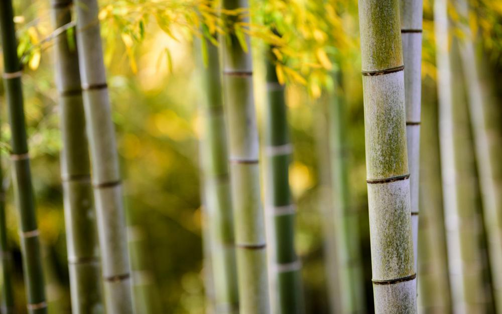 Nature, bamboo, bamboo stem, bamboo leaves, bamboo forest scenery desktop wallpaper