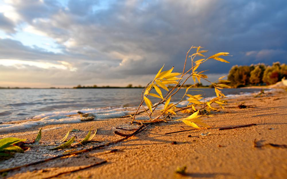Sky, leaf, beach, nature, branches, landscapes, background